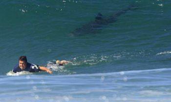 surfista_tiburon